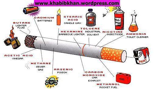Dilarang Merokok | Bebas Bicara | Entertainment | Education