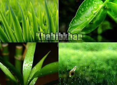 greenwallpaper_screenshoot