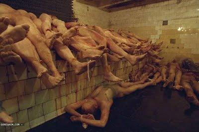 organ tubuh manusia